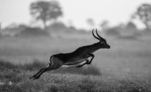 Francebourse � l'heure des gazelles